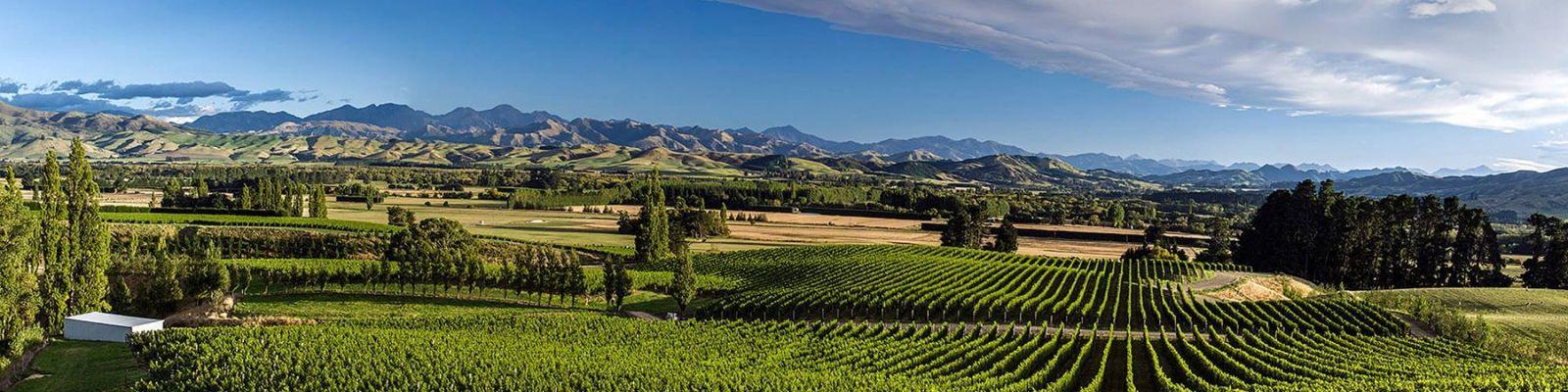 Canterbury Wine Region