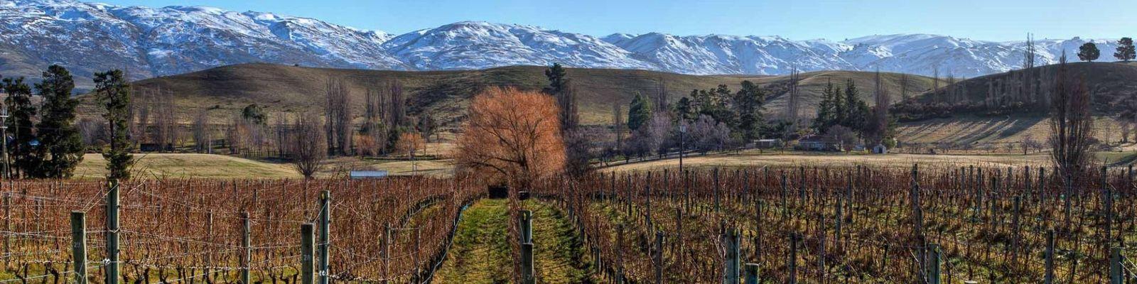 Central Otago Wine Regions