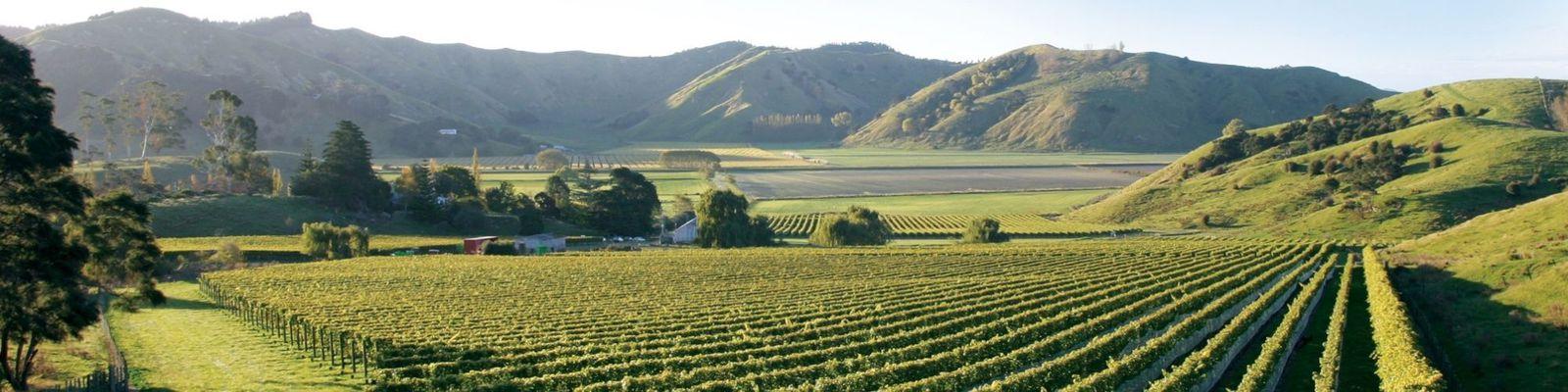 Gisborne Wine Region