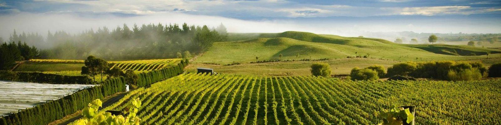Hawkes Bay Wine Region