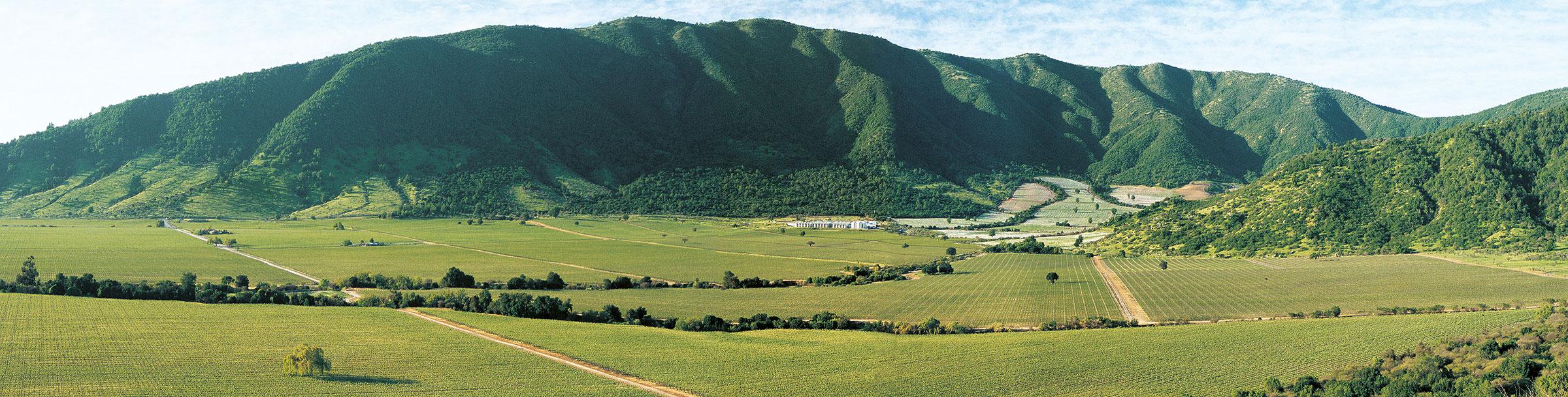 Caliterra Base Winery