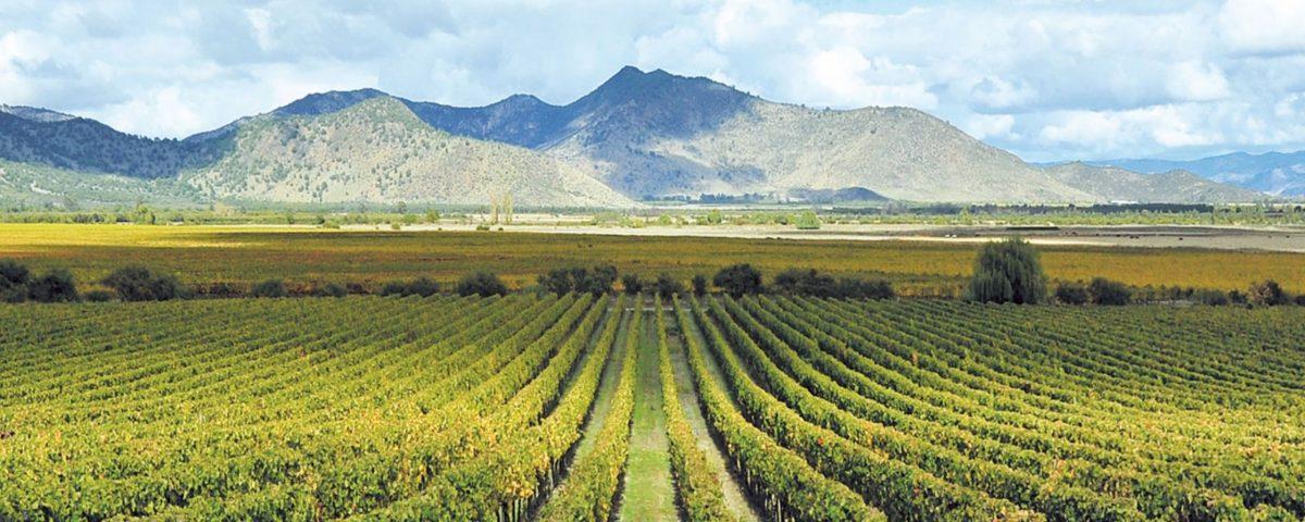 Caliterra Wine Maker